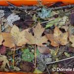 Leaves In Box